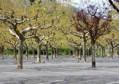 20_platanen Frankrijk