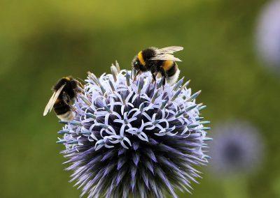 28_bijen