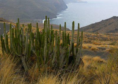 cactus-klif