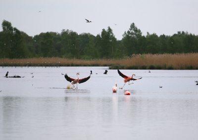 3a_IMG_1092_flamingo's