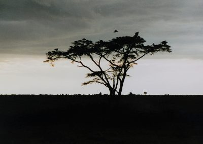 MasaiMara_avondlichtboom