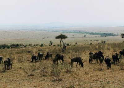 MasaiMara_gnoes