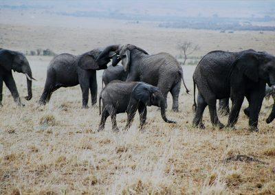 MasaiMara_olifanten1