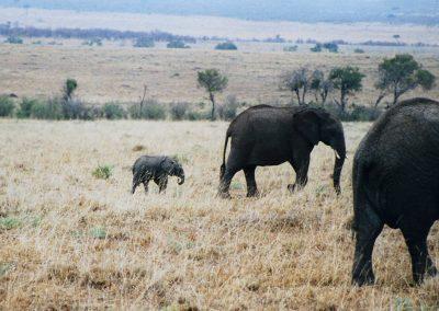 MasaiMara_olifantenjong