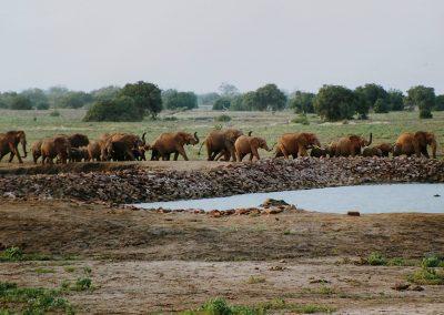 Travo-oost_olifantenfam