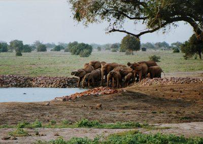 Travo-oost_olifantenfam1