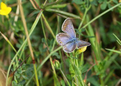 0R3A8240_vlinder-crop_s